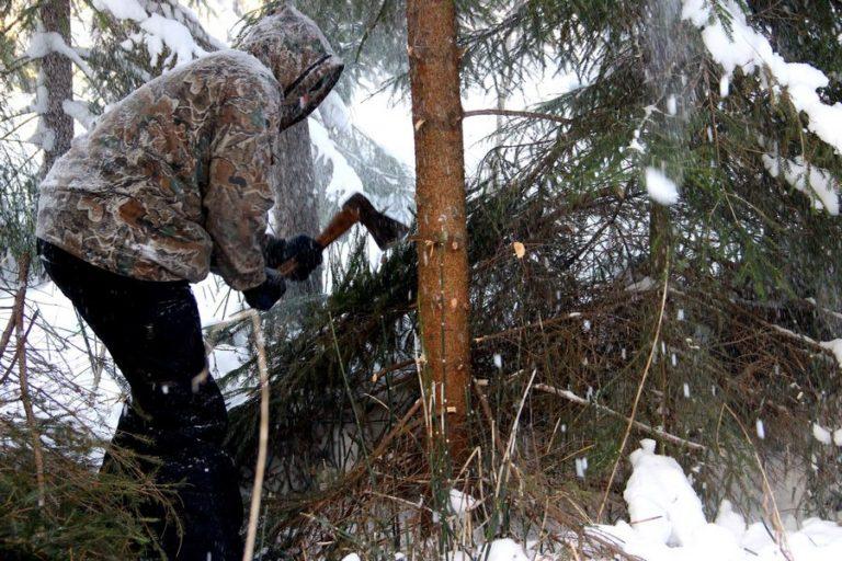 ловит дерево которое рубят