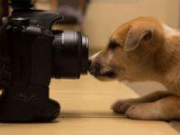 Собака-фотоконкурс