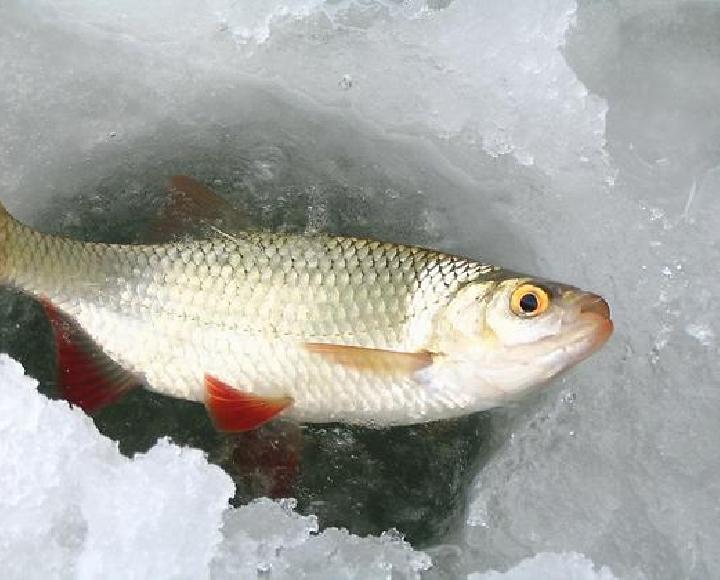 Замор рыбы