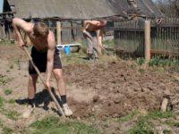 Грядки копают