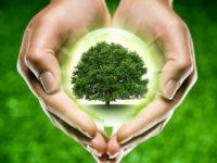 Древо в руках