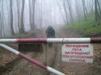 Запрет на лес
