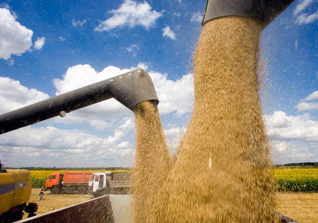 Зерно сыплется